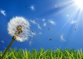 Charlottes de protection contre les pollens